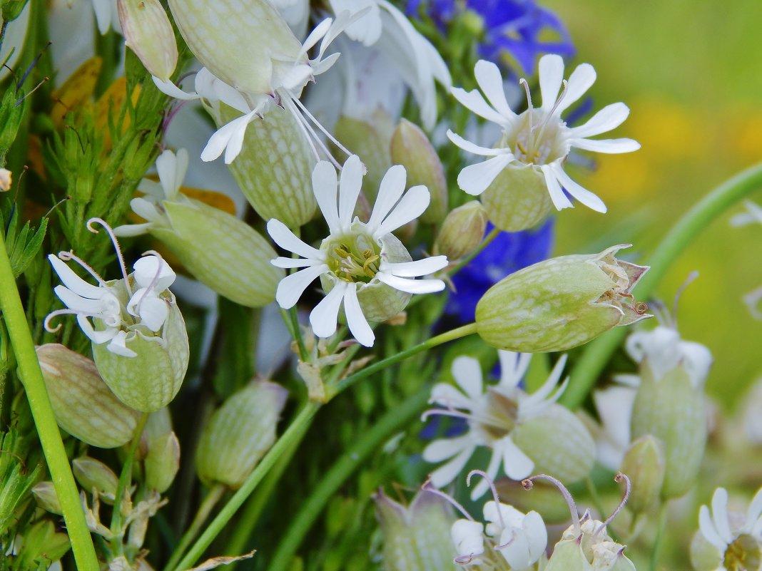 Мир удивительных растений - Валентина Пирогова