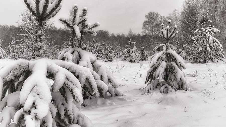 После снегопада. - Андрий Майковский