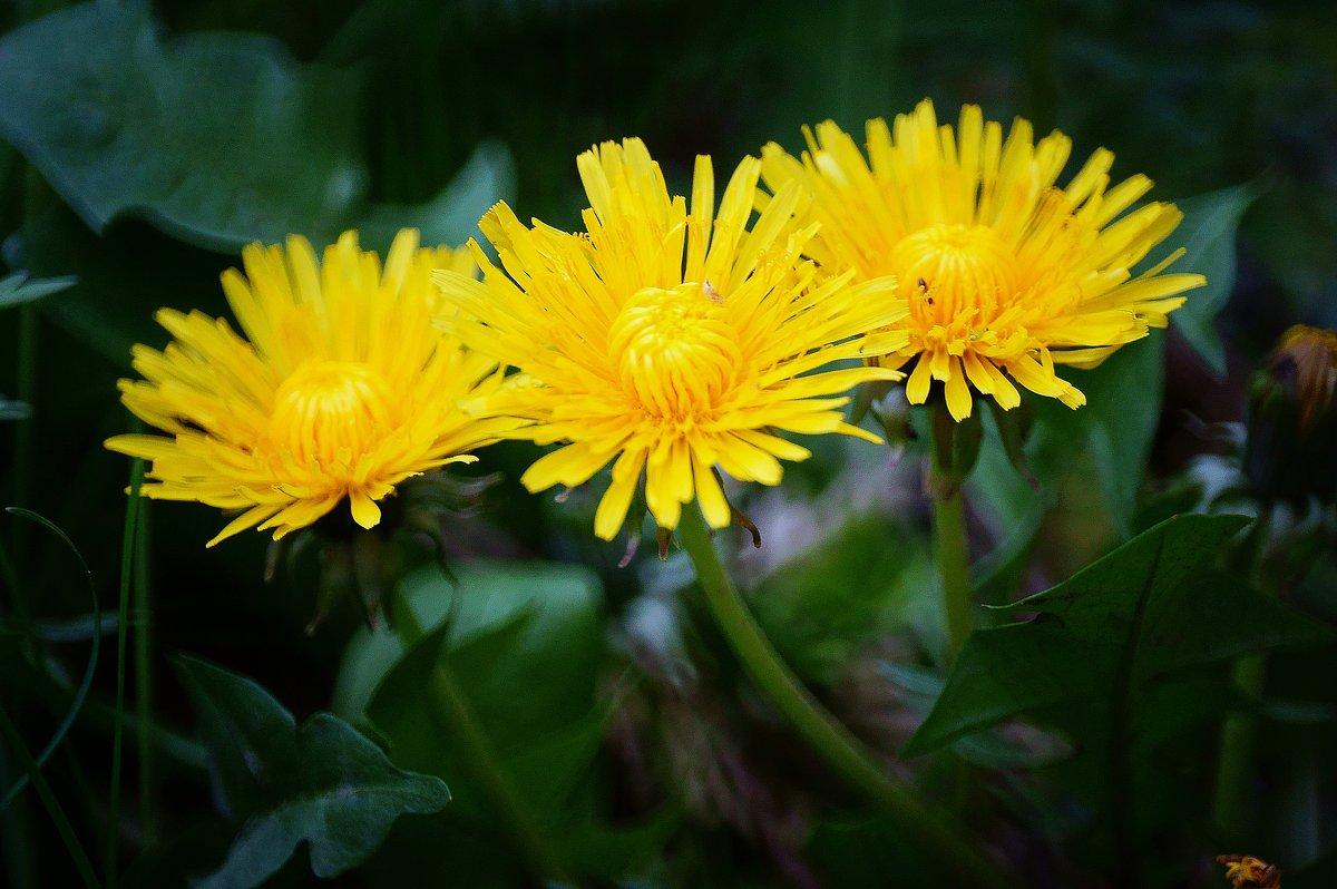 цветы - Стас