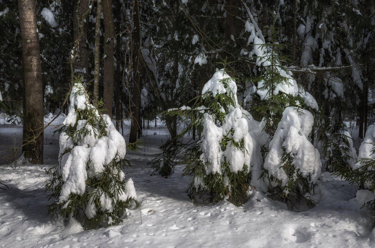 Новогодние хозяйки в естественной среде обитания . - Va-Dim ...