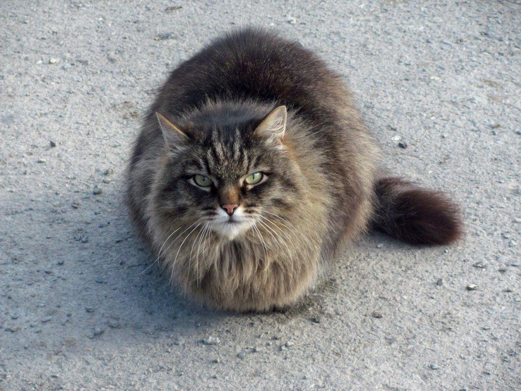 Мартовский кот - Лидия Суюрова