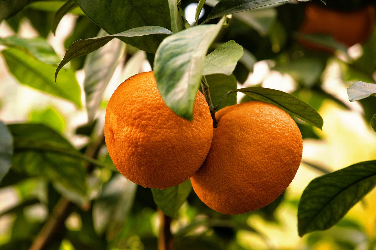 Апельсинки - Елена