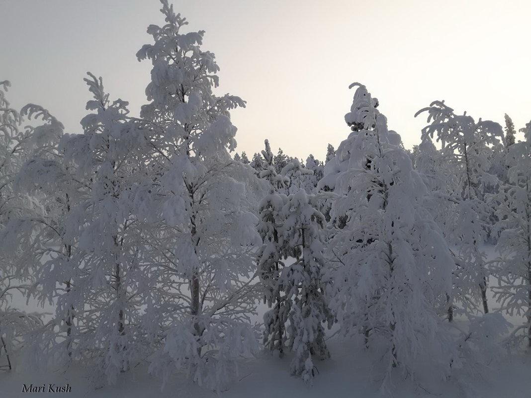 Финляндия - Mari Kush