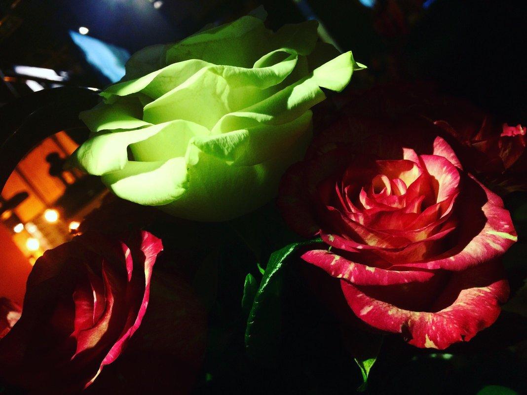 розы спрятались во тьме. - Уля Машникова