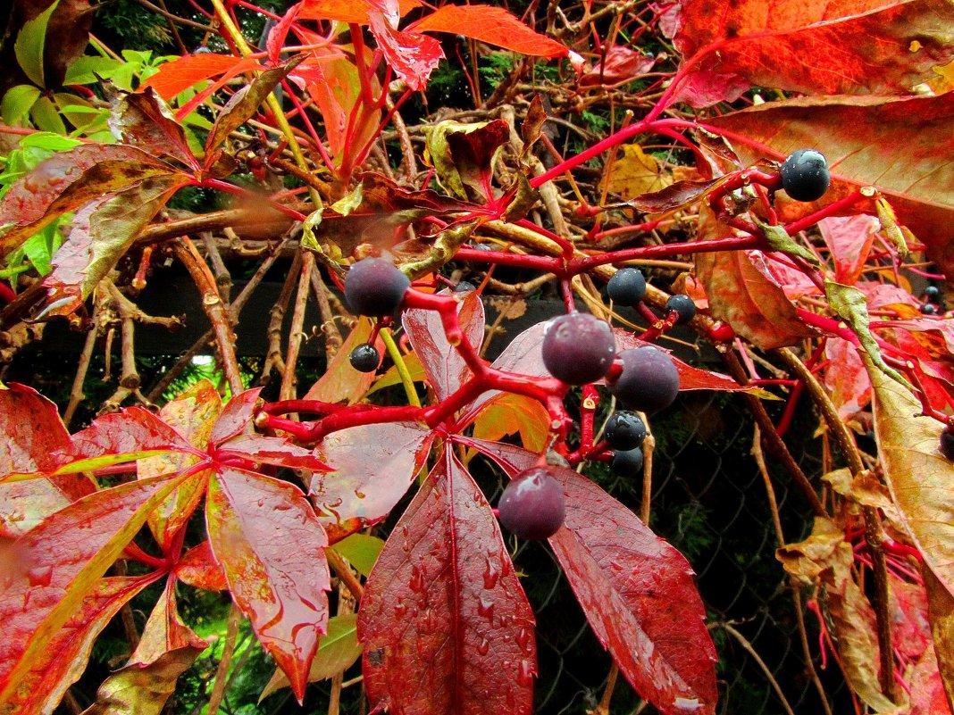 Осенние плоды - Сергей Карачин
