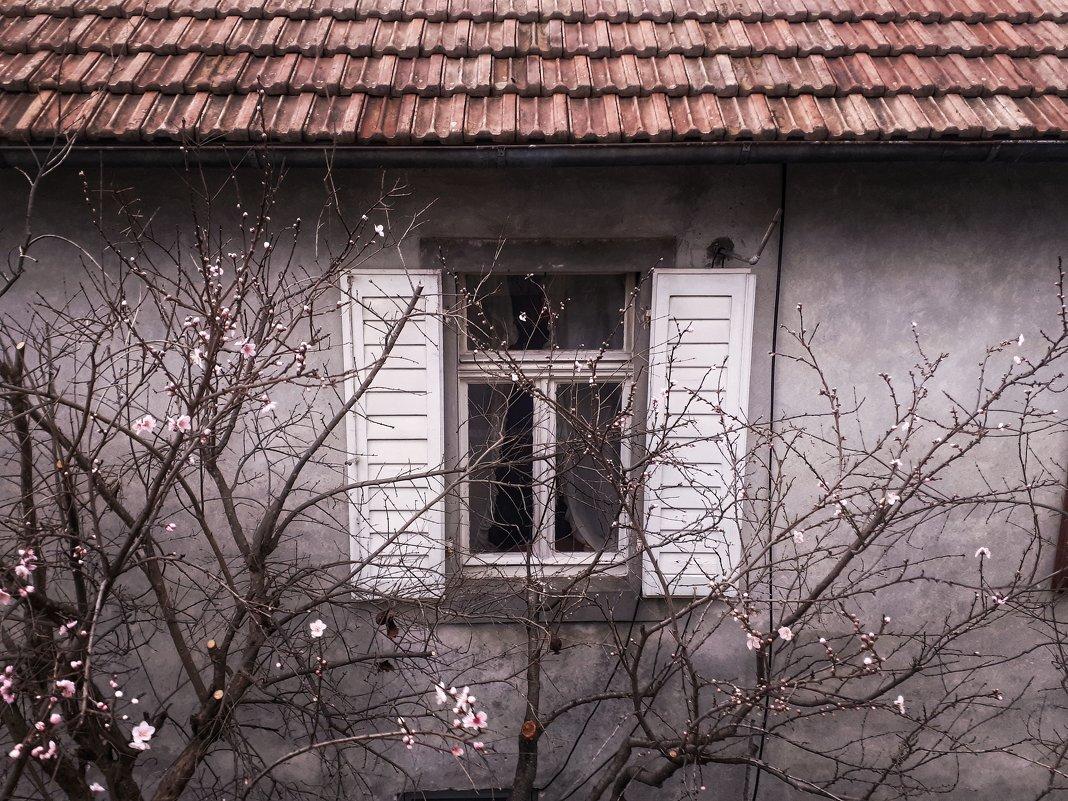 Чужие окна манят - Мари Соколкина