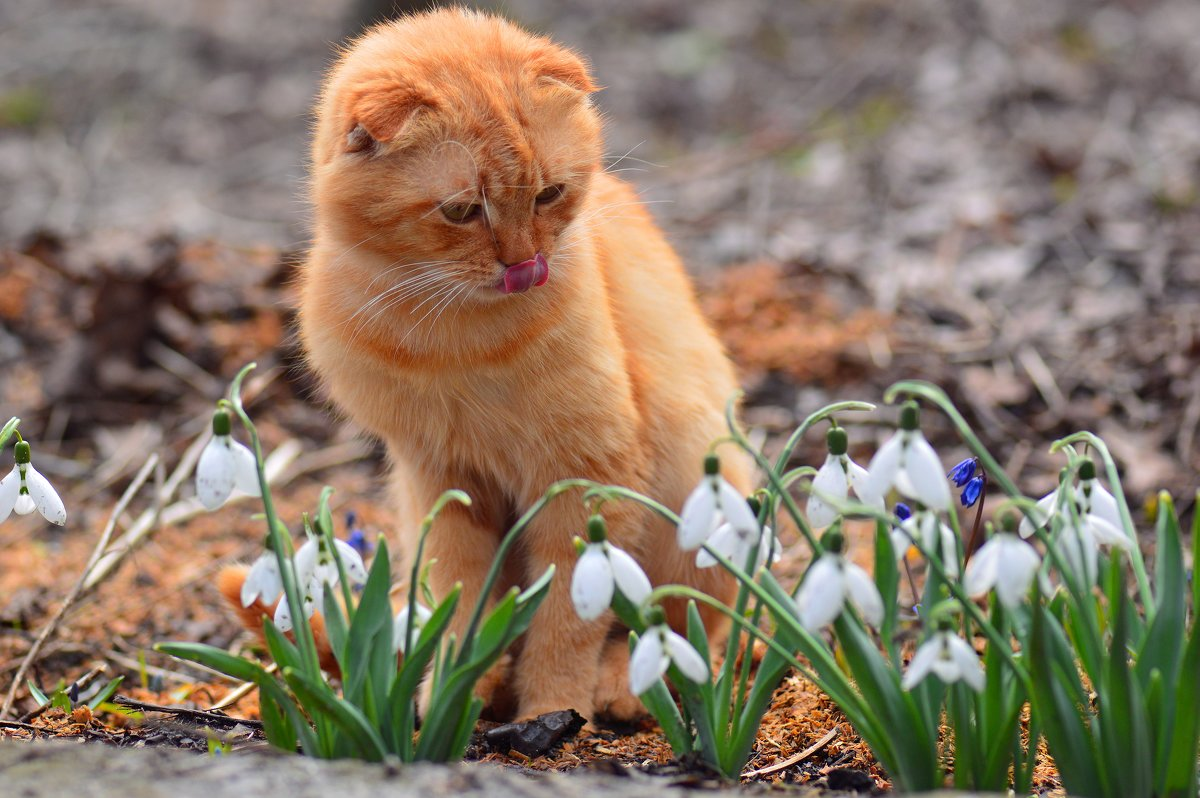 весна пришла - Viktoriya Bilan