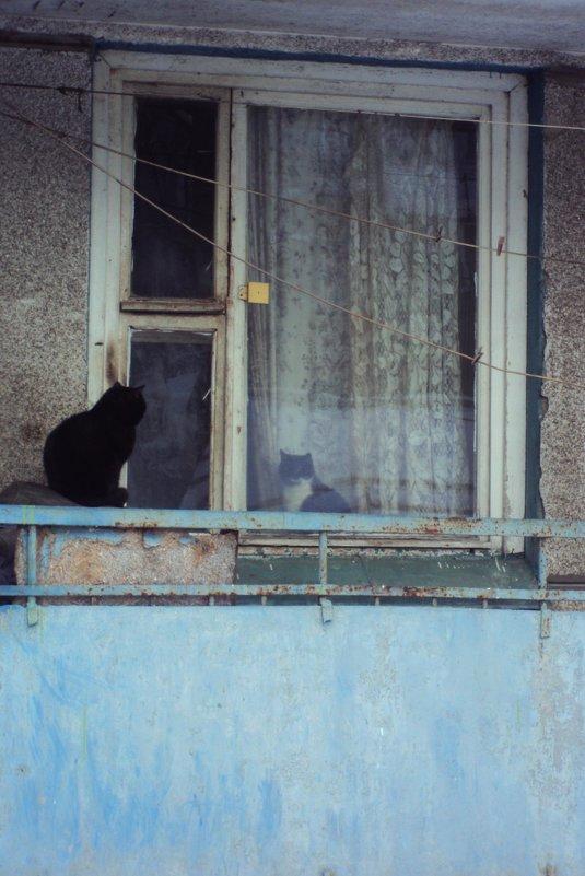 свидание через стекло - Maryana Petrova