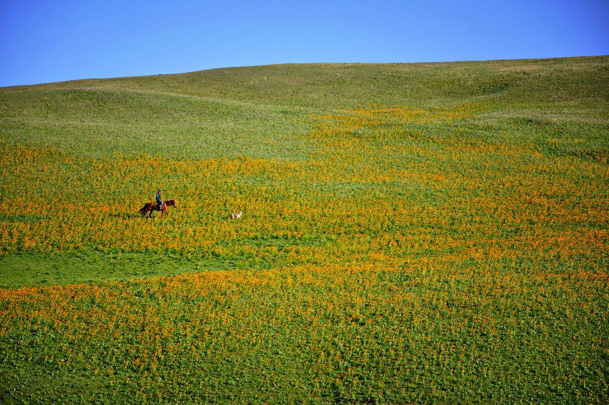 одинокий пастух - santamoroz