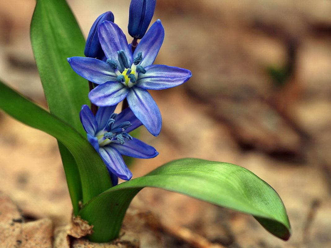 Весны цветы. Апрель... - Александр Резуненко