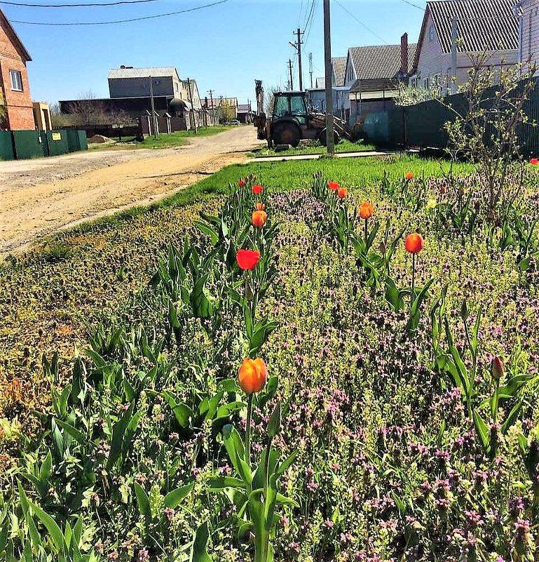 Весна в Краснодарском крае - Алла ZALLA