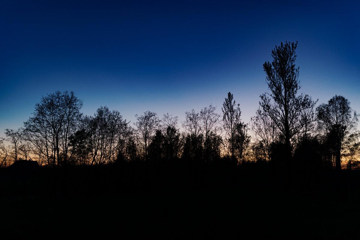 Деревья - Шахин Халаев