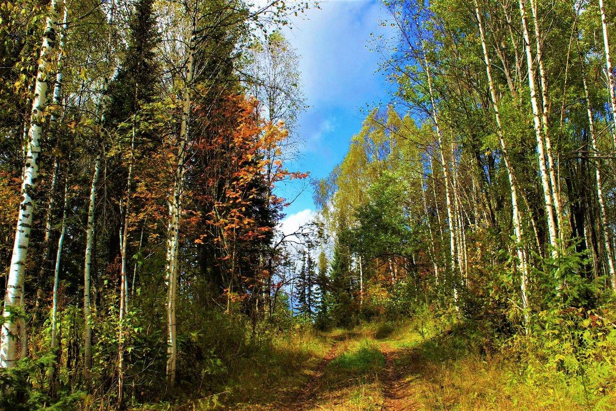 Осенняя дорожка - Сергей Чиняев