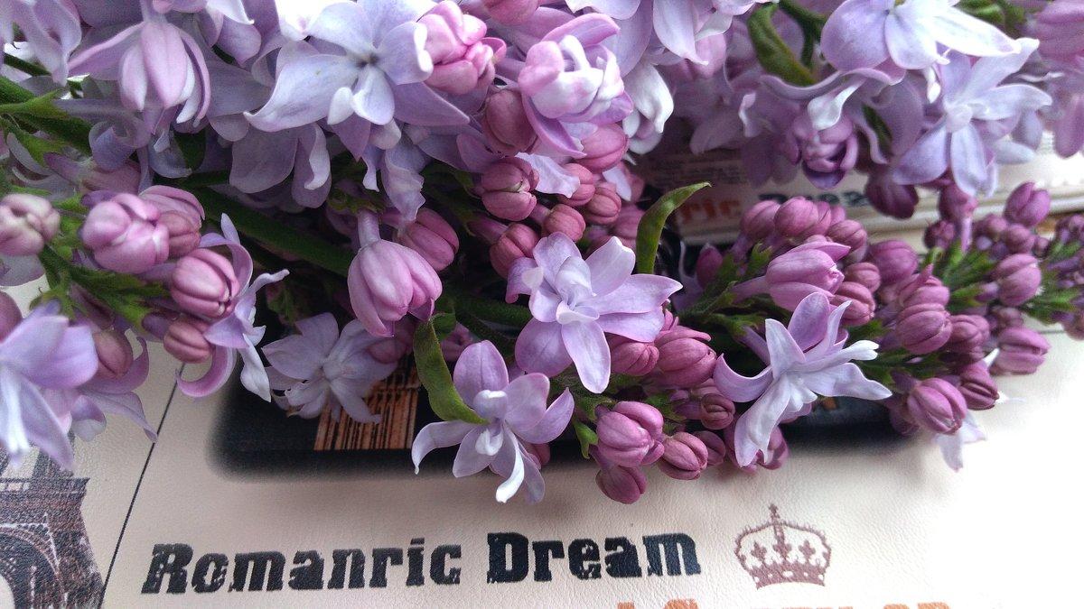 Dream*мечта - °•●Елена●•° ♀