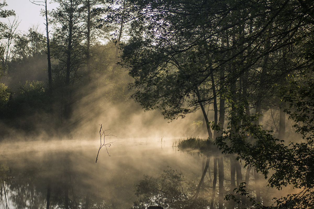 туман 5 - Геннадий Свистов