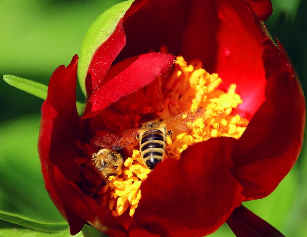 Пчелиное раздолье - Alexander Andronik