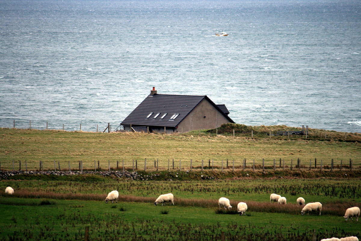 Домик у моря, или шотландская пастораль...(Мы бедные овечки..., никто нас не пасет...) - Olga
