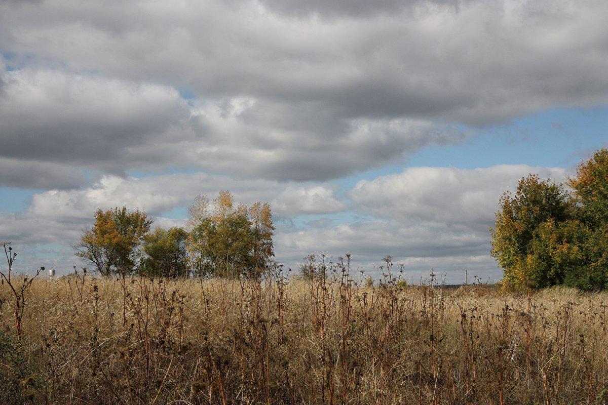 Осенние травы - ZNatasha -