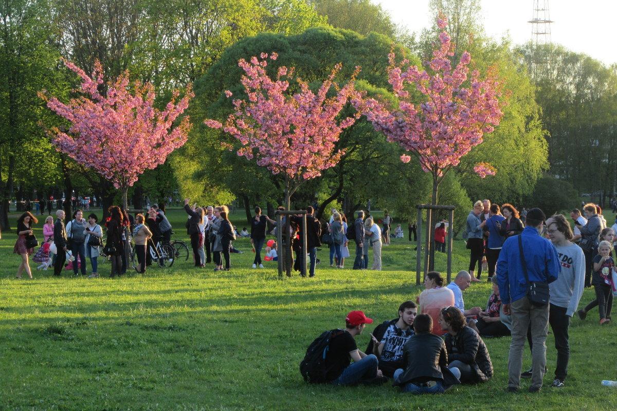В парке - Mariya laimite