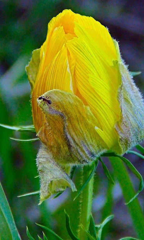 Цветущий май - Люба (Or.Lyuba) Орлова