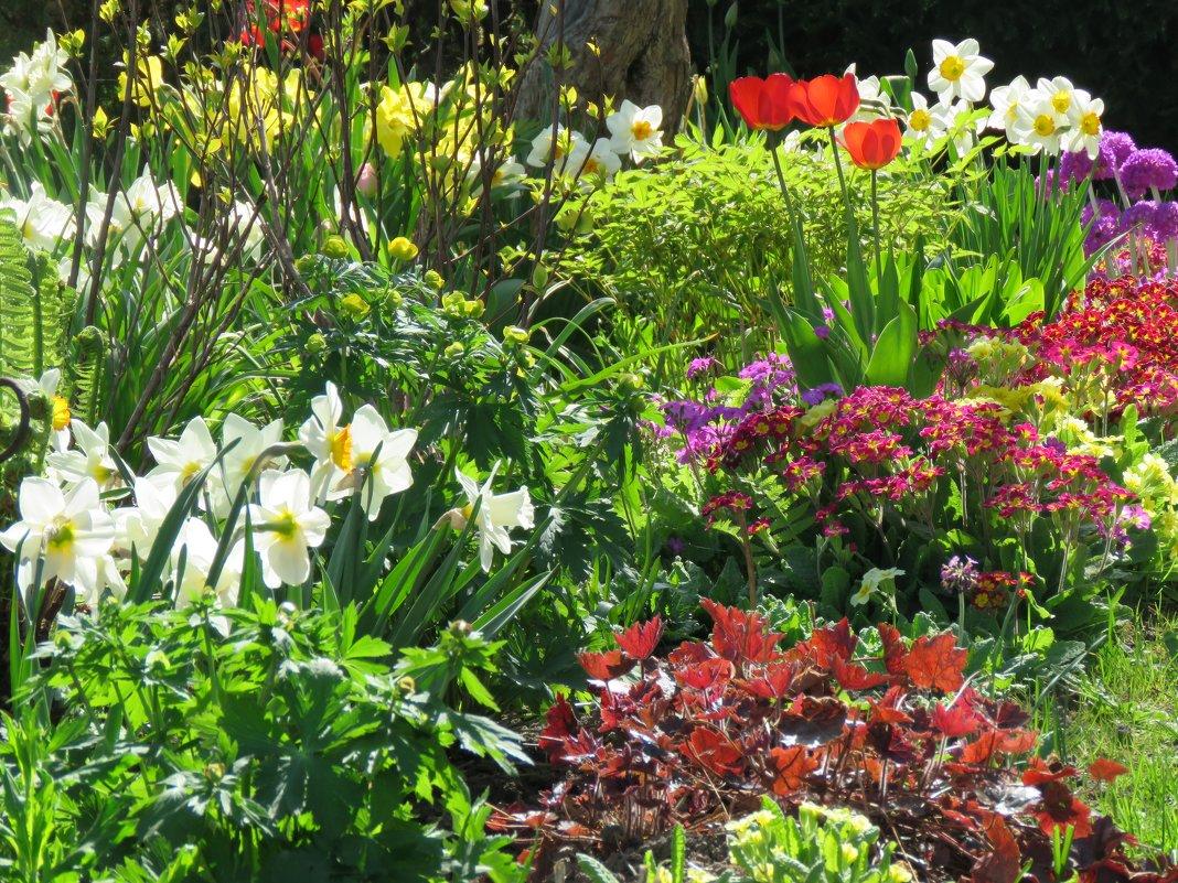 Пик цветения первоцветов в моем саду - Татьяна$