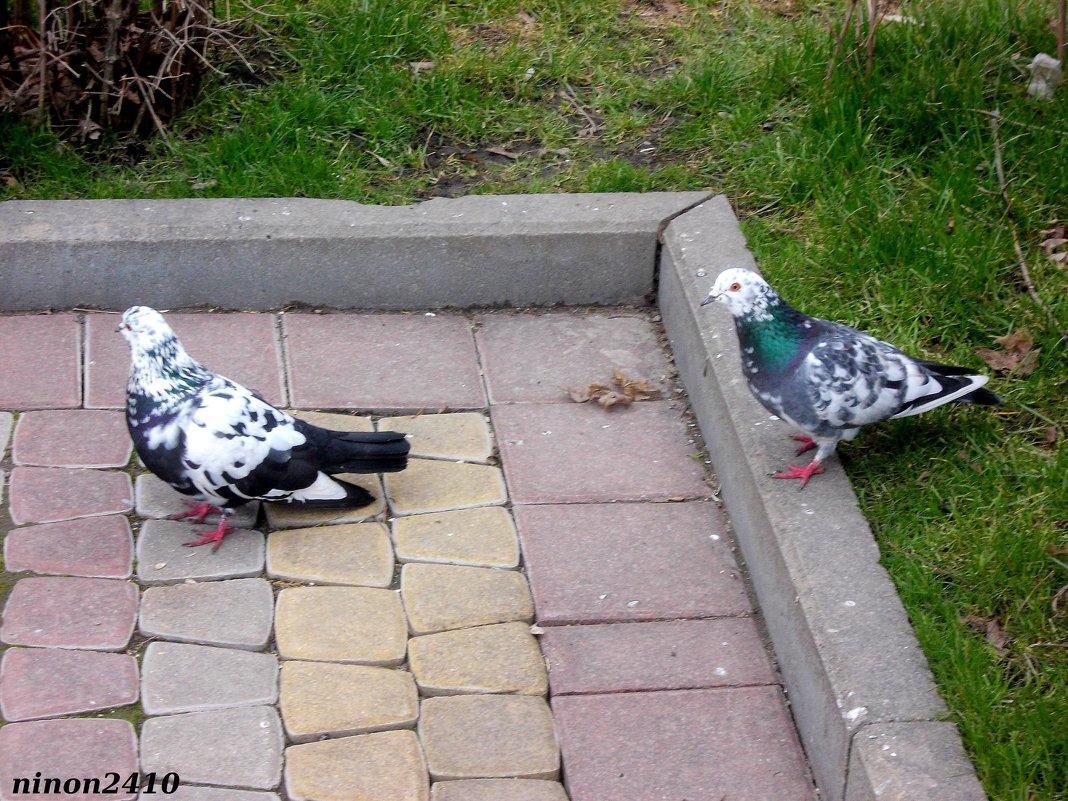 Городские голуби - Нина Бутко