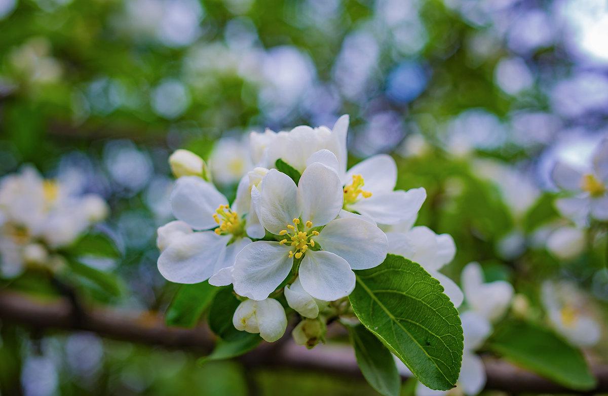 Весна - Юра Викулин
