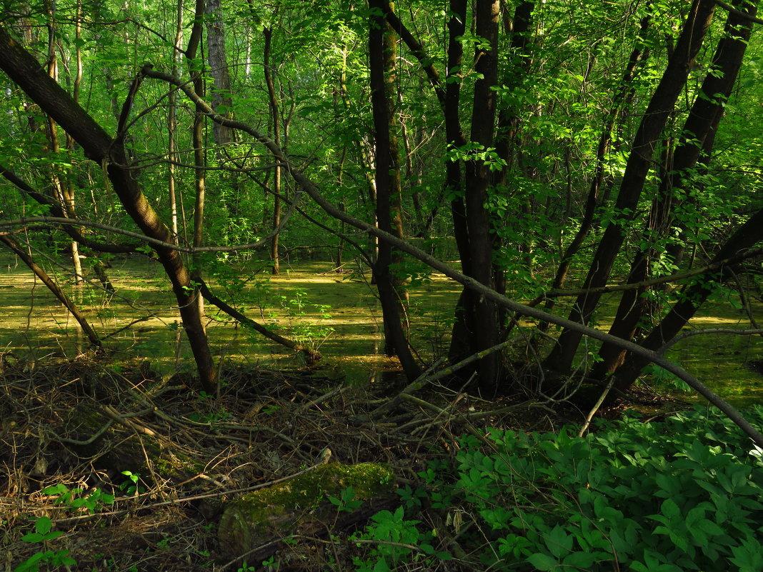 Найти семь отличий от лета - Андрей Лукьянов