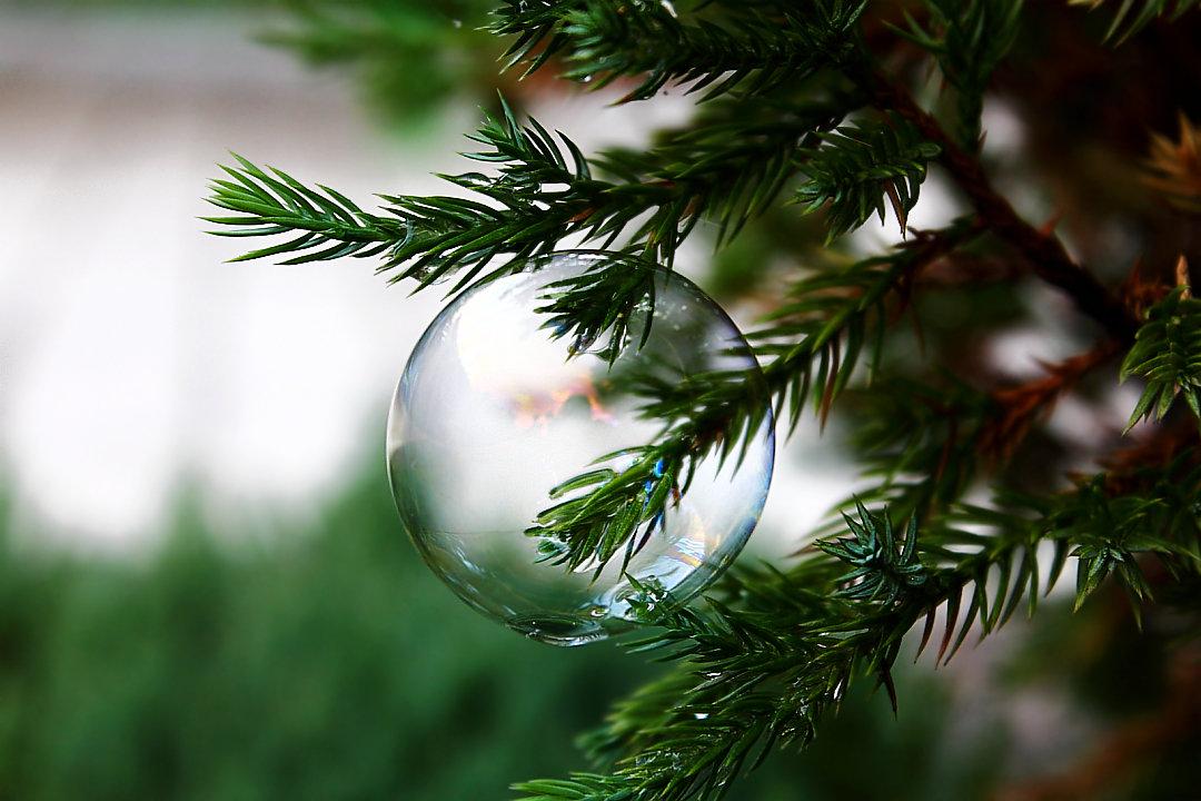 Хрупкое новогоднее украшение. Праздновать придётся быстро... - Dmitry Saltykov