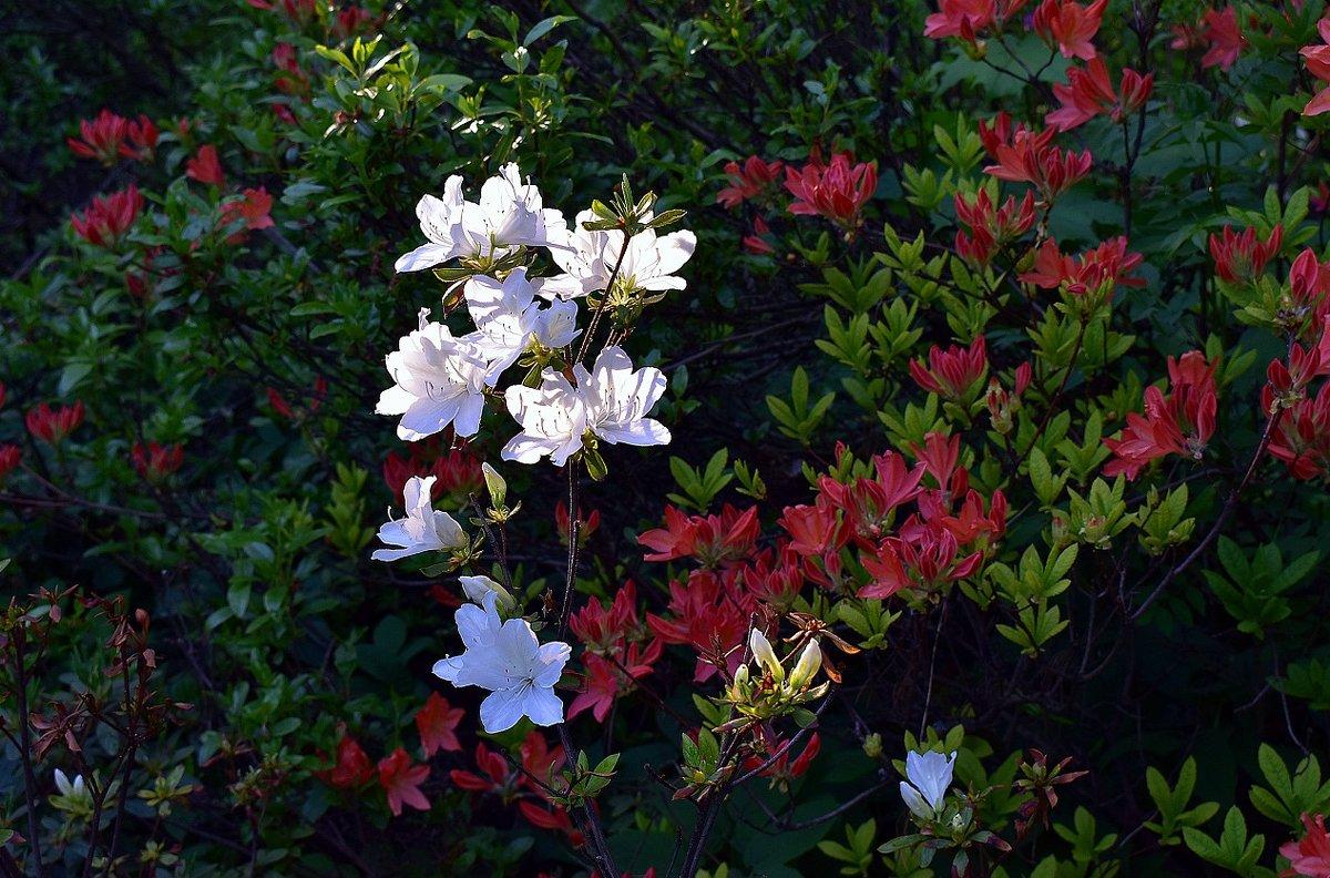 Краски лета - dindin