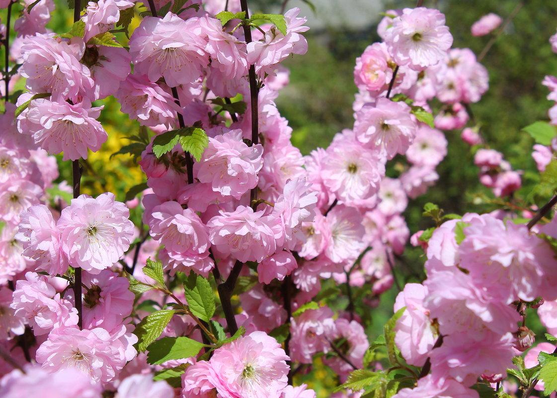 Весенними цветами украсилась земля. - Валентина ツ ღ✿ღ