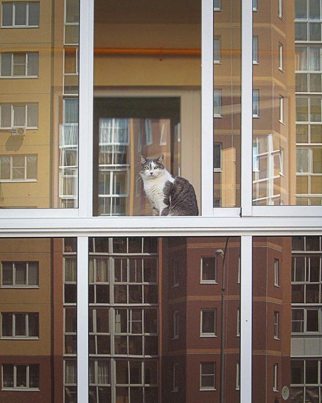 кошка и город - Лера