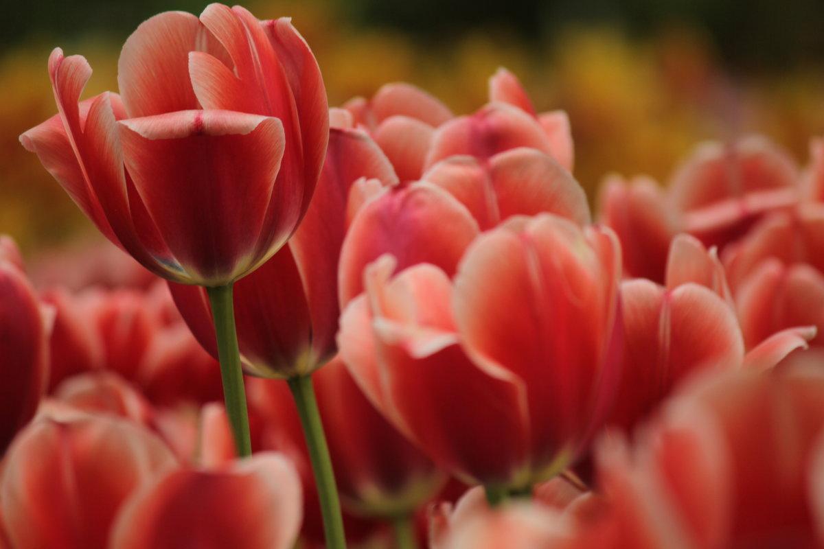 Краски Весны... - mirtine