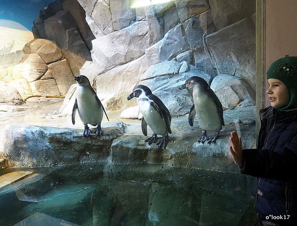 заглянуть к пингвинам - Олег Лукьянов