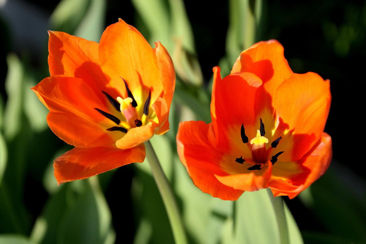 Яркая весна - Валентина