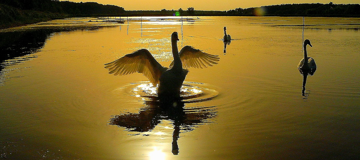 Лебединое озеро - олег свирский