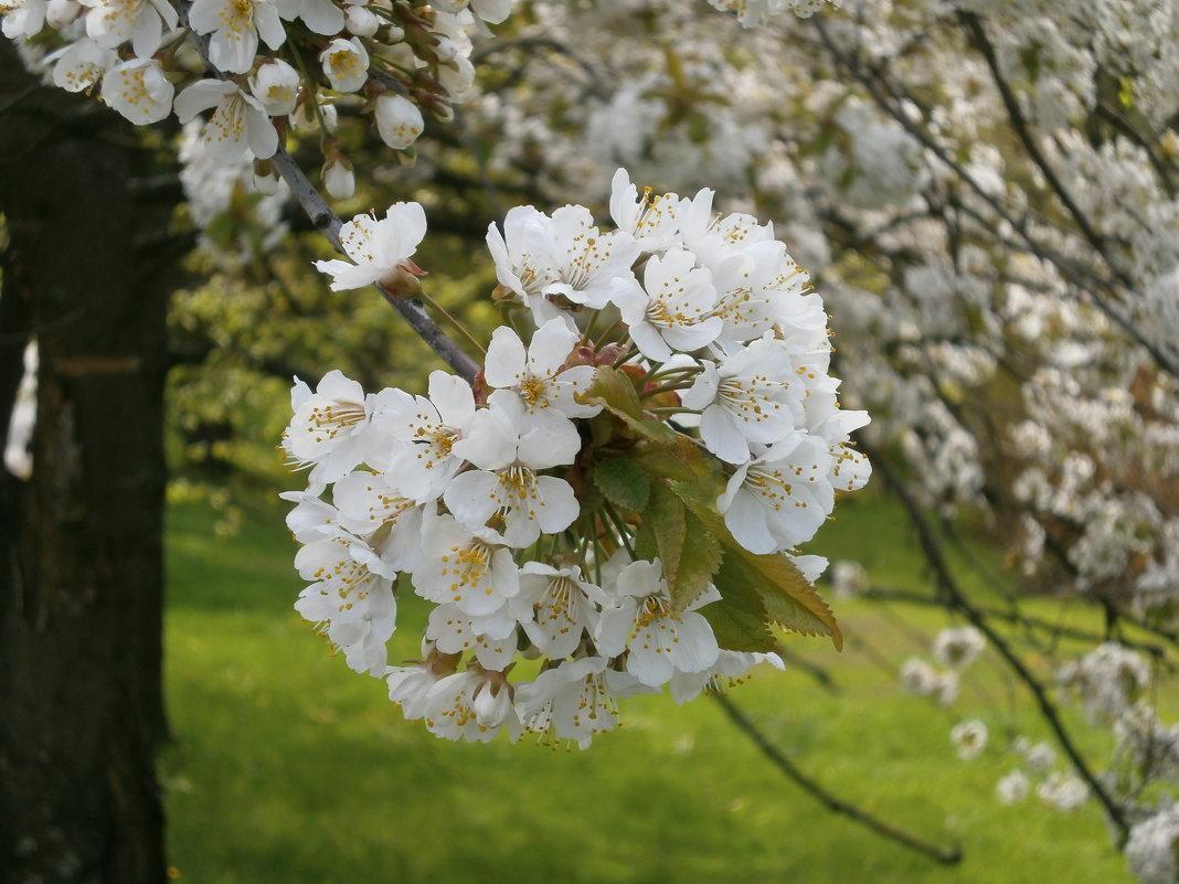 Весна - Алёна Савина