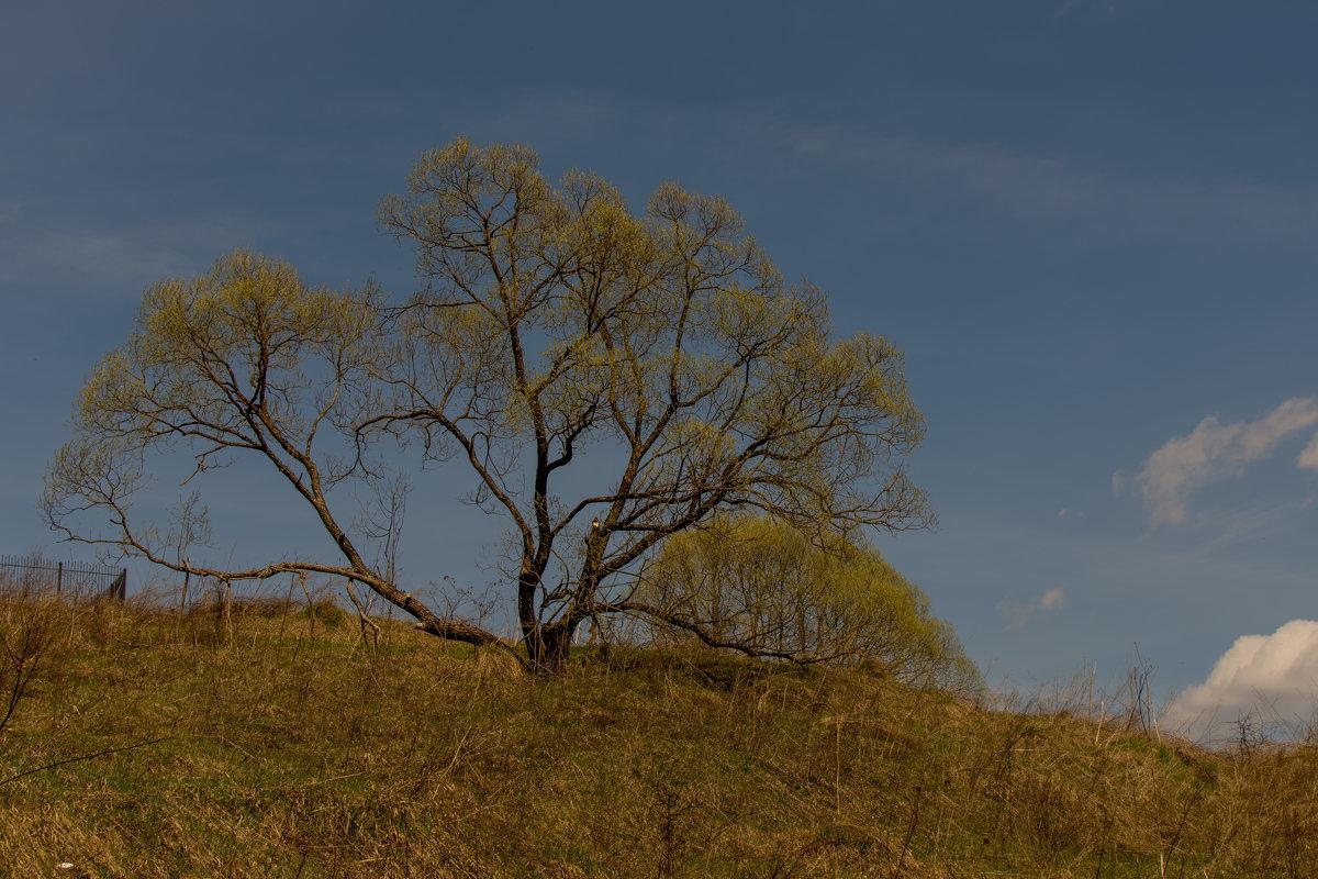 Одинокое дерево - Максим