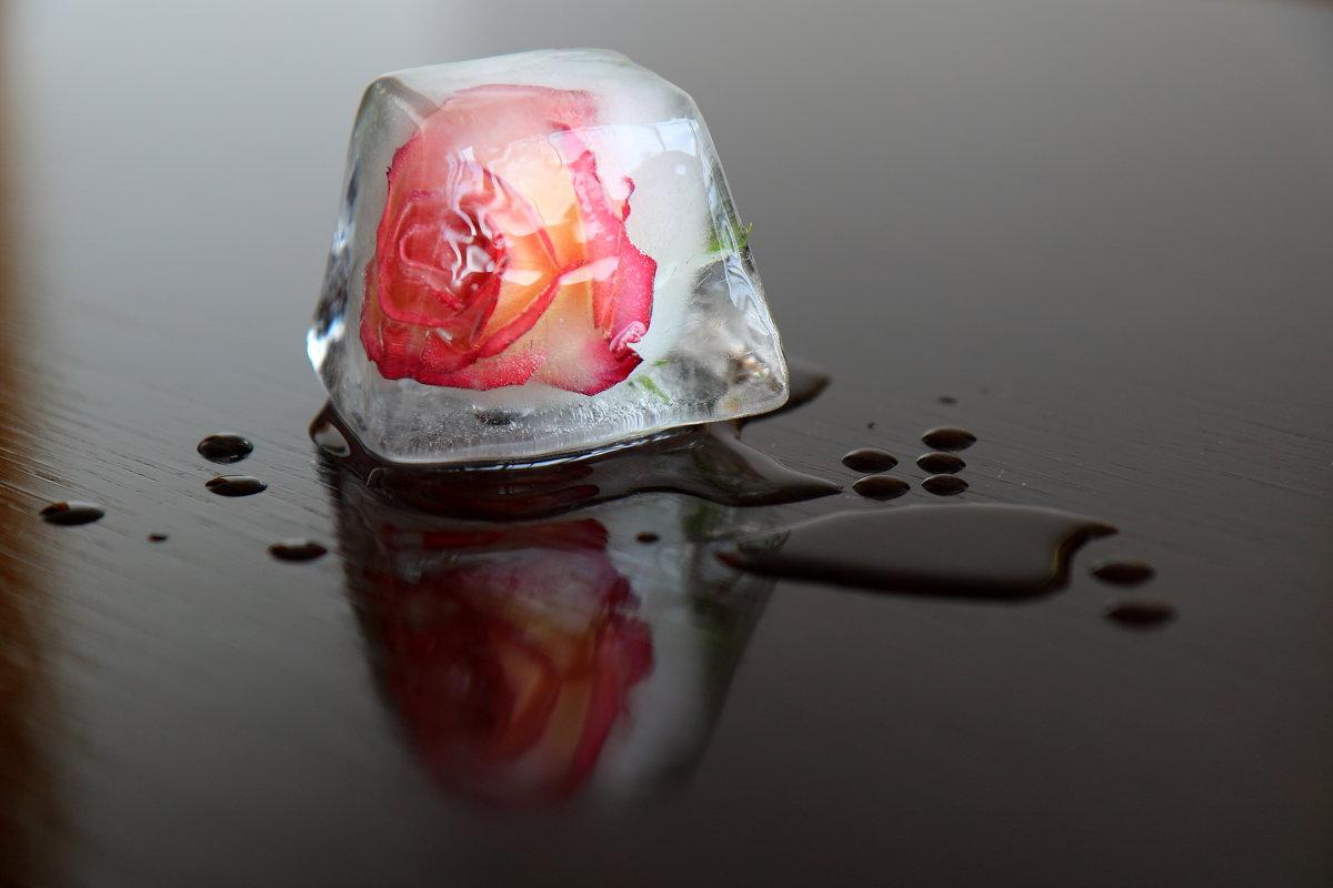 Роза во льду. - Ирина Волкова