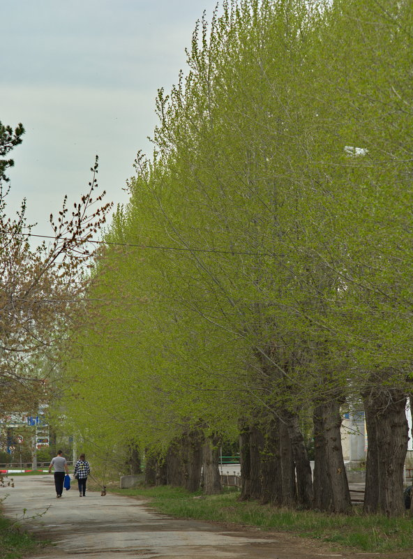 Как нравится мне, когда листва ещё нежно-зелёная... - Михаил Полыгалов