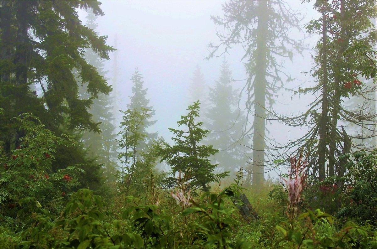 Туман в лесу - Сергей Чиняев