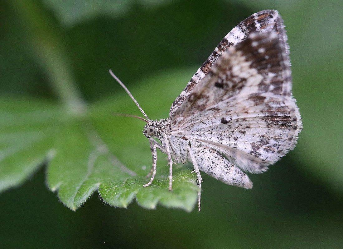 Бабочка - ZNatasha -