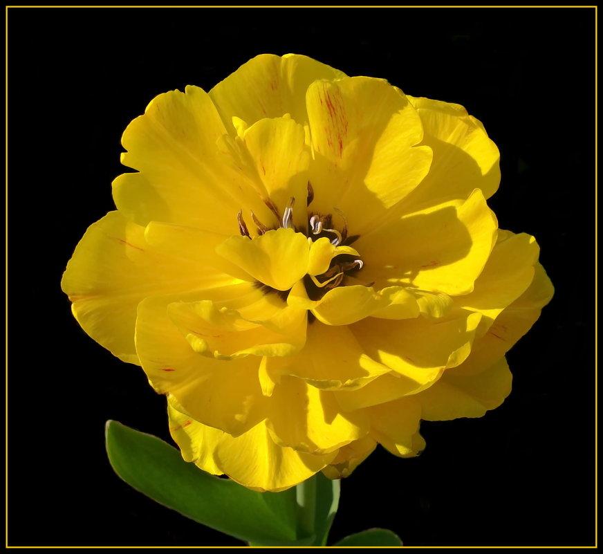 Желтый помпон - lady v.ekaterina