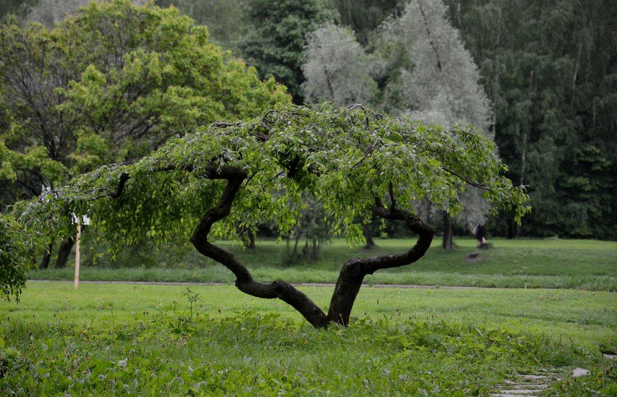 Дерево - Ольга Соловьева