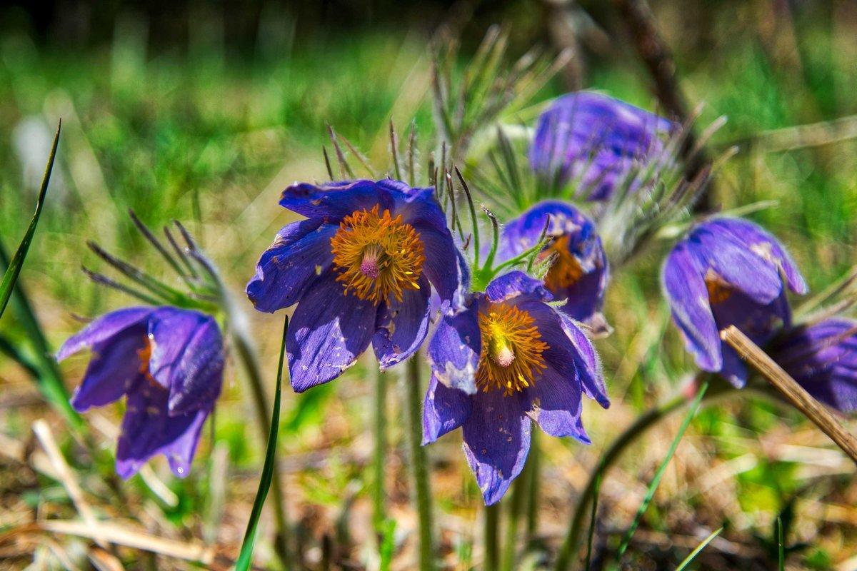майские цветы - Alexandr Staroverov