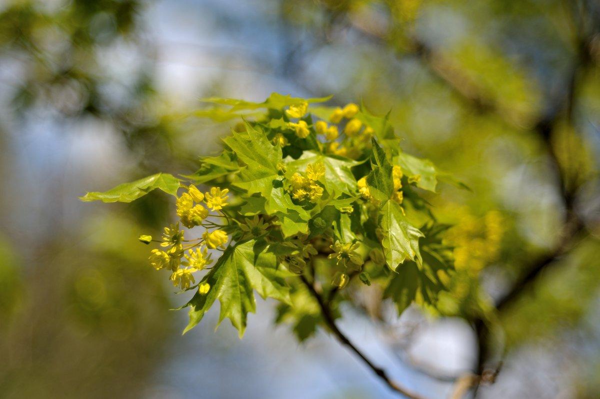 Цветущий май... #2 - Андрей Вестмит