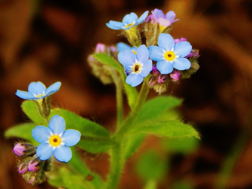 Незабываемые цветочки - Валентина Пирогова