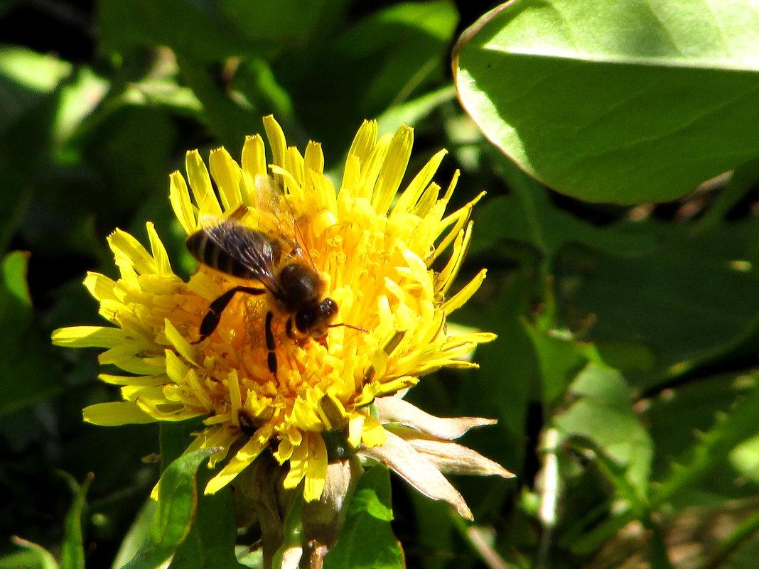 Пчёлка - Светлана