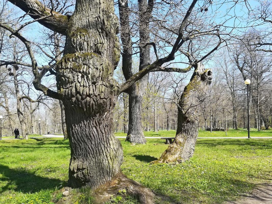 В парке Кадриорг - veera (veerra)