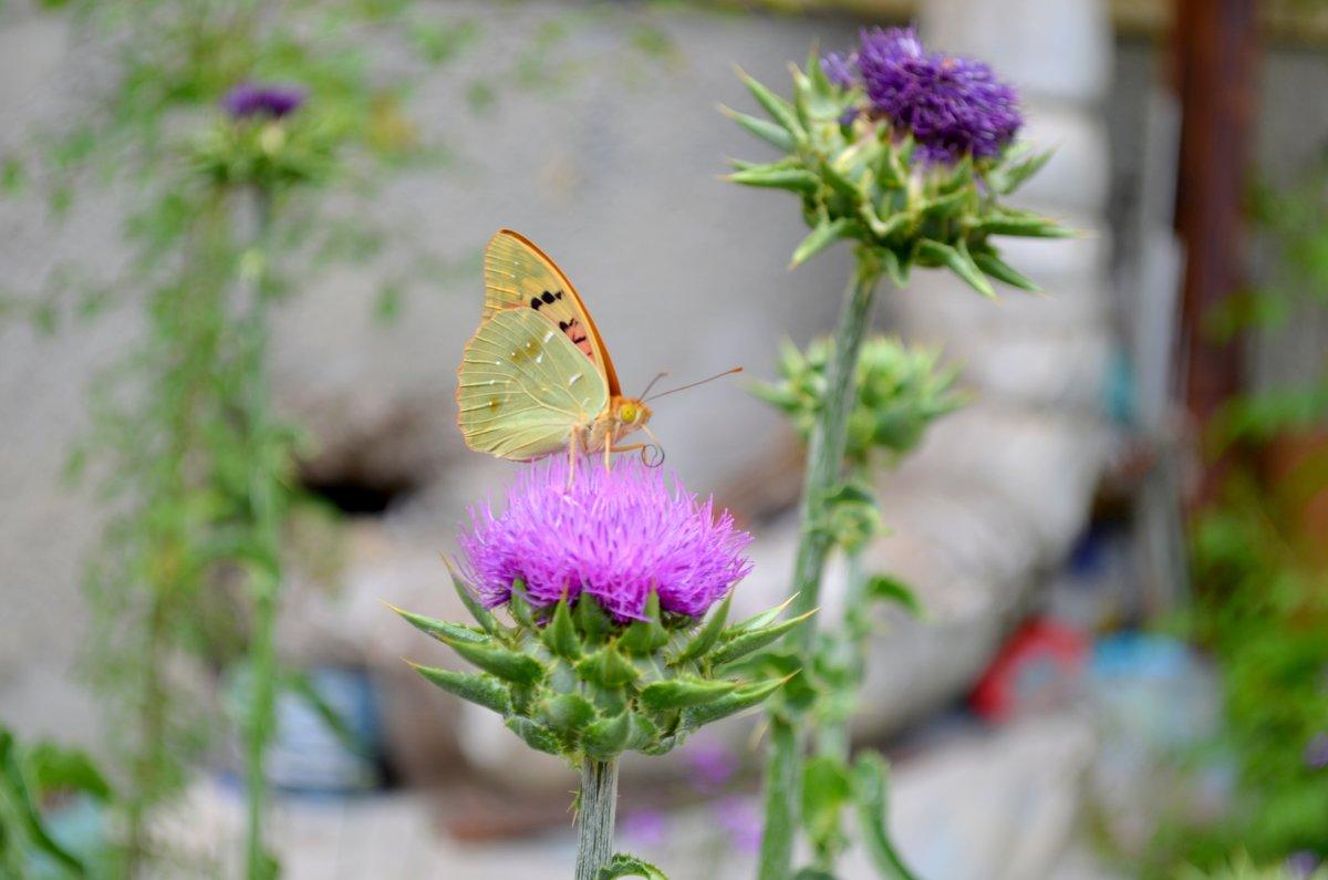 Бабочка - Артур Хороший